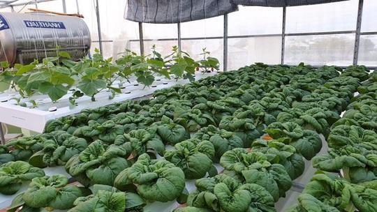 Gia đình trẻ biến sân thượng trống thành 'khu vườn trên mây' - Ảnh 5.