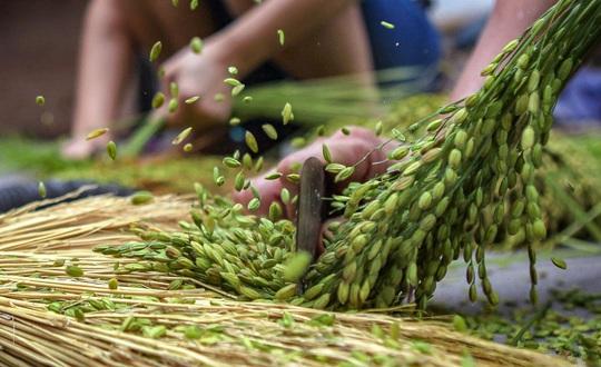 Khoảnh khắc Hà Nội trong mùa đẹp nhất năm - Ảnh 13.