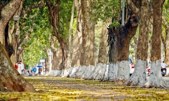 Khoảnh khắc Hà Nội trong mùa đẹp nhất năm - Ảnh 7.