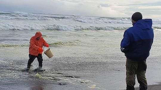 Thảm họa Kamchatka - Nga: Gần như tất cả sự sống dưới đáy biển bị xóa sổ - Ảnh 5.