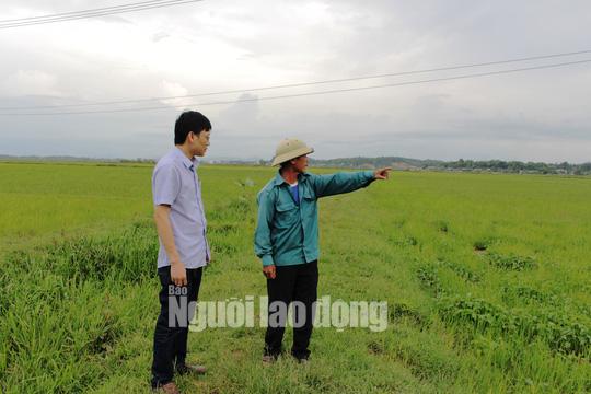 Huyện cấp 8 tạ lúa giống cho dân, xã ngâm kho hết hạn nên đem bán cho vịt ăn - Ảnh 3.