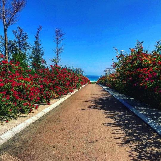 Du hí Quy Nhơn: Nhất định phải check-in con đường hoa ven biển vạn người mê - Ảnh 6.