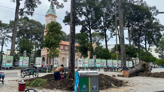 Chặt bỏ hàng loạt cây xanh ở công viên Văn Lang vì... chết đứng! - Ảnh 3.