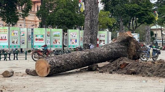 Chặt bỏ hàng loạt cây xanh ở công viên Văn Lang vì... chết đứng! - Ảnh 2.