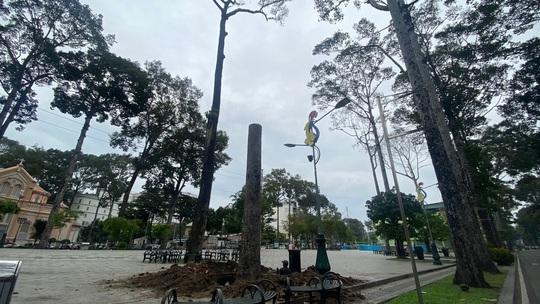 Chặt bỏ hàng loạt cây xanh ở công viên Văn Lang vì... chết đứng! - Ảnh 1.