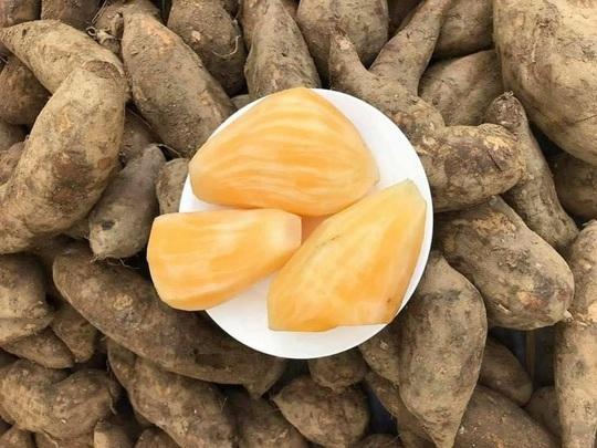 Đặc sản Lào Cai giá rẻ như khoai - Ảnh 4.