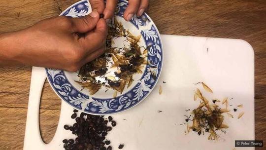 Lạ lùng món kiến mông to của người Colombia - Ảnh 3.