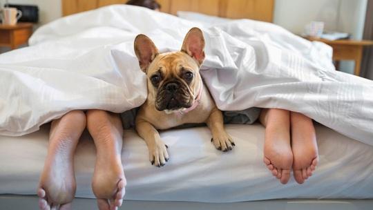 Có hai con chó trong đêm tân hôn - Ảnh 1.