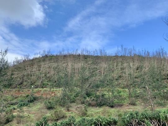 Hàng chục ngàn cây xanh trên đảo Lý Sơn bị bão vặt trụi lá - Ảnh 10.