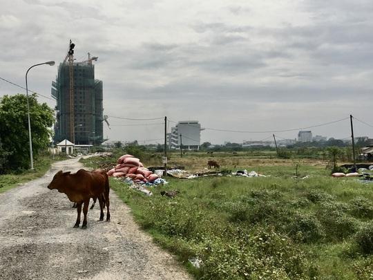 Cận cảnh hàng trăm tấn rác tấn công Khu tái định cư 38 ha ở quận 12 - Ảnh 5.
