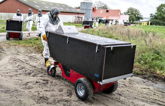 Cảnh tượng đáng sợ ở Đan Mạch: Xác chồn nổi lên từ hố chôn tập thể - Ảnh 1.