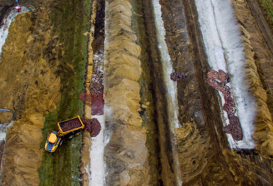 Cảnh tượng đáng sợ ở Đan Mạch: Xác chồn nổi lên từ hố chôn tập thể - Ảnh 3.