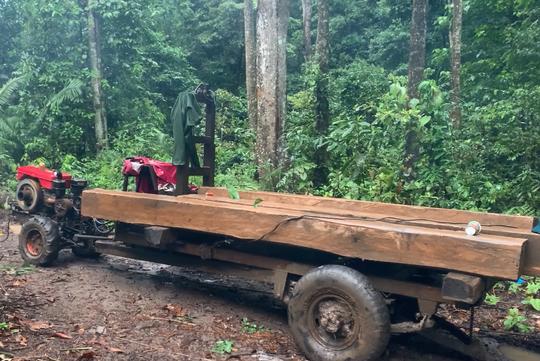 Còn phá rừng, còn thảm họa thiên tai: Rừng nguyên sinh bị rút ruột mỗi ngày - Ảnh 4.