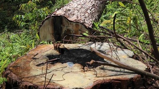 Bắt tạm giam đối tượng phá rừng ở Lâm Đồng - Ảnh 5.