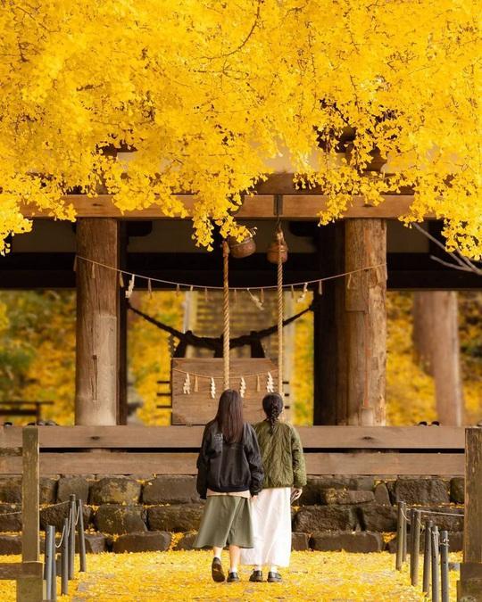 Cây rẻ quạt 800 tuổi ở Fukushima - Ảnh 3.