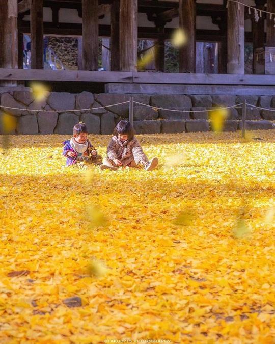 Cây rẻ quạt 800 tuổi ở Fukushima - Ảnh 6.
