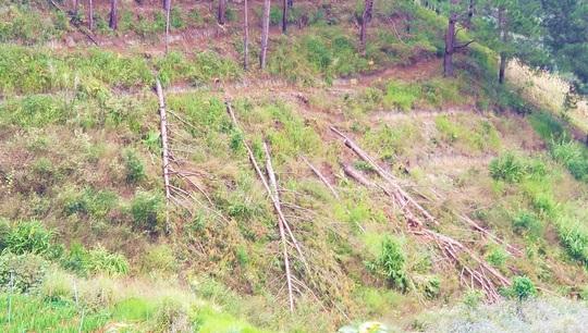 Hàng chục căn nhà trái phép mọc lên sát núi Voi ở Lâm Đồng - Ảnh 11.