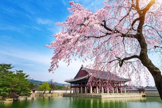 Trải nghiệm một Hàn Quốc mới lạ cùng BenThanh Tourist - Ảnh 3.