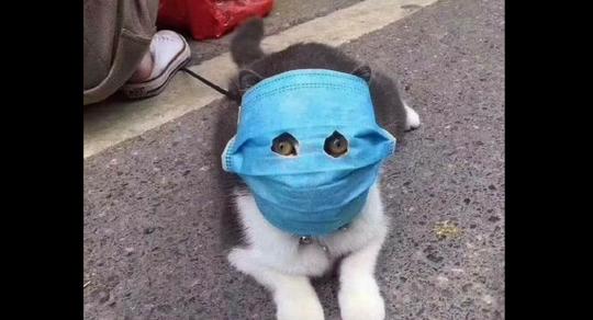 Covid-19: Cả mèo cũng đeo khẩu trang ở Trung Quốc - Ảnh 1.