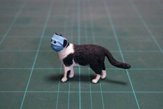 Covid-19: Cả mèo cũng đeo khẩu trang ở Trung Quốc - Ảnh 3.