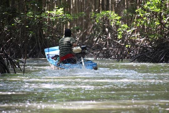 CLIP: Săn bắt loài cá biết leo cây đang dần cạn kiệt ở Cà Mau - Ảnh 6.