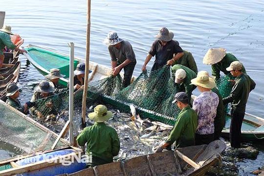 Đồng Nai: Nhiều người vây luồng cá nặng hàng tấn ở hồ sông Mây - Ảnh 1.