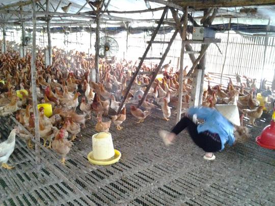 Giá gà tăng gấp đôi, người chăn nuôi vẫn than lỗ - Ảnh 1.