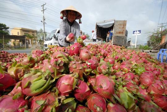 Mở thêm thị trường cho nông sản - Ảnh 1.