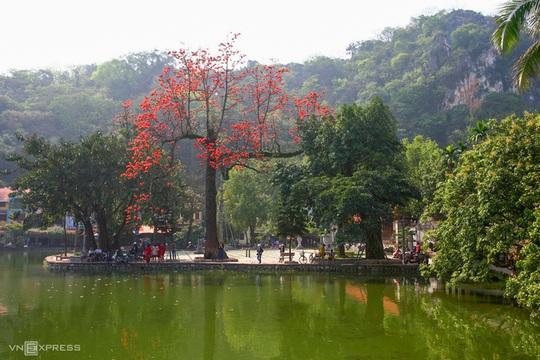 Rực đỏ hoa gạo trước sân chùa Thầy - Ảnh 3.