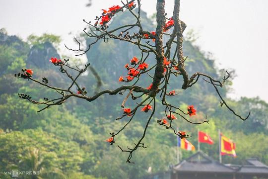 Rực đỏ hoa gạo trước sân chùa Thầy - Ảnh 5.