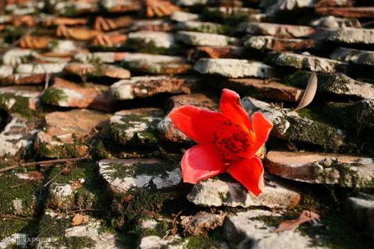 Rực đỏ hoa gạo trước sân chùa Thầy - Ảnh 6.