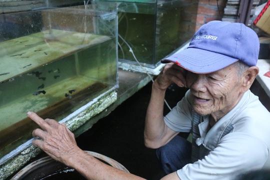 CLIP: Cụ ông 83 tuổi tiết lộ sở thích chơi cá lia thia gần 70 năm - Ảnh 2.
