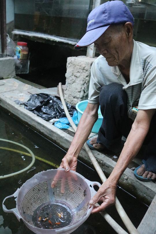 CLIP: Cụ ông 83 tuổi tiết lộ sở thích chơi cá lia thia gần 70 năm - Ảnh 8.