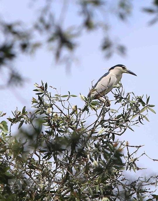 Phê duyệt phương án quản lý Khu bảo vệ cảnh quan rừng tràm Trà Sư - Ảnh 2.