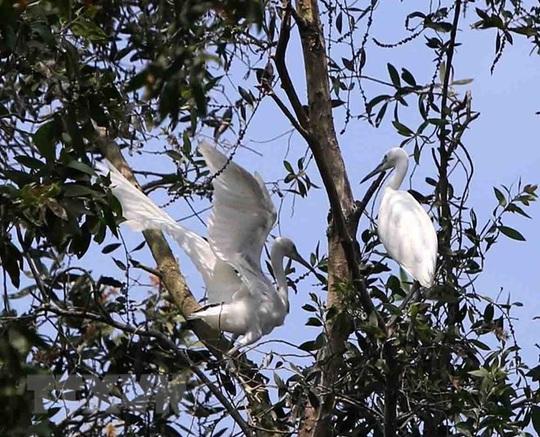Phê duyệt phương án quản lý Khu bảo vệ cảnh quan rừng tràm Trà Sư - Ảnh 3.