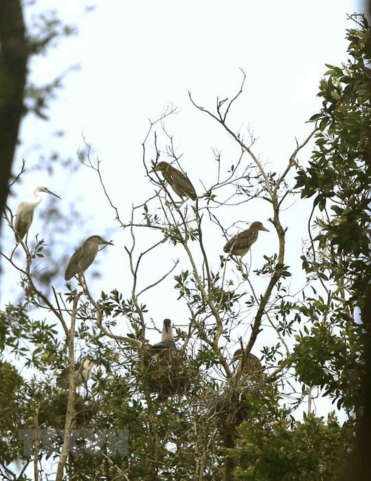 Phê duyệt phương án quản lý Khu bảo vệ cảnh quan rừng tràm Trà Sư - Ảnh 4.