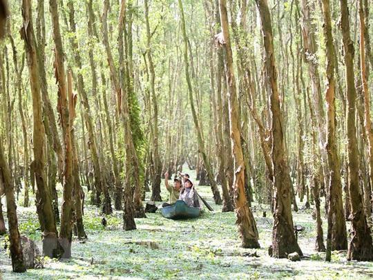 Phê duyệt phương án quản lý Khu bảo vệ cảnh quan rừng tràm Trà Sư - Ảnh 5.