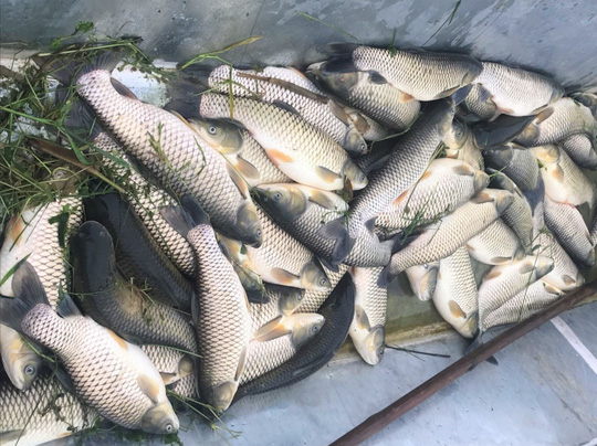Chưa rõ nguyên nhân hơn 11 tấn cá chết bất thường trên sông Chu - Ảnh 1.