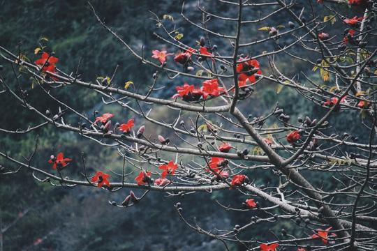 Du xuân Hà Giang, gieo mình giữa bạt ngàn hoa - Ảnh 18.