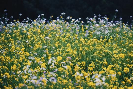 Du xuân Hà Giang, gieo mình giữa bạt ngàn hoa - Ảnh 23.
