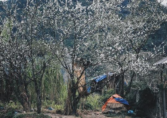 Du xuân Hà Giang, gieo mình giữa bạt ngàn hoa - Ảnh 22.