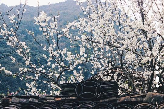 Du xuân Hà Giang, gieo mình giữa bạt ngàn hoa - Ảnh 5.