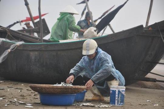 Nhiều người dậy thật sớm rủ nhau ra biển bắt hàng tấn cá trích - Ảnh 4.