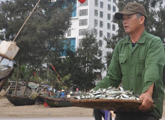 Nhiều người dậy thật sớm rủ nhau ra biển bắt hàng tấn cá trích - Ảnh 6.