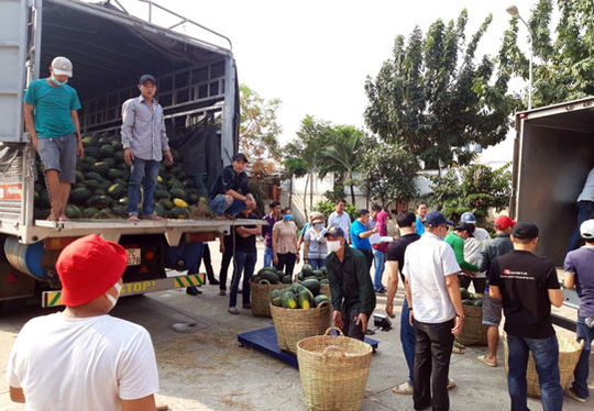 Hỗ trợ tiêu thụ 8,7 tấn dưa hấu cho nông dân tỉnh Đắk Lắk - Ảnh 1.