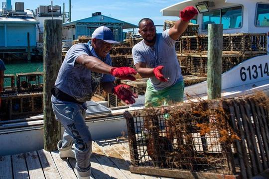 Ngư dân Mỹ không bán được tôm hùm mùa dịch Covid-19 - Ảnh 3.