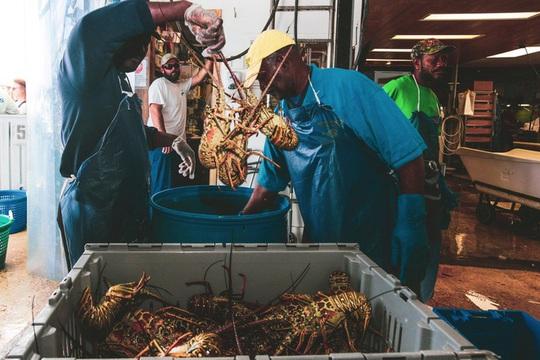 Ngư dân Mỹ không bán được tôm hùm mùa dịch Covid-19 - Ảnh 5.