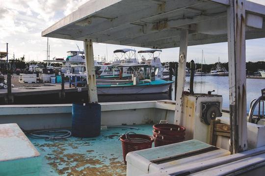 Ngư dân Mỹ không bán được tôm hùm mùa dịch Covid-19 - Ảnh 6.