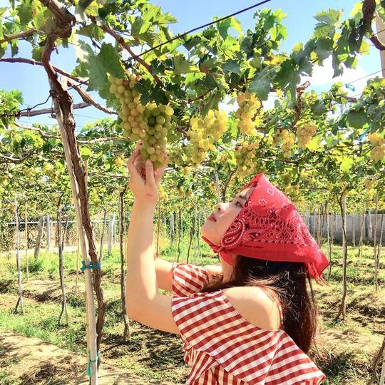 Khám phá vườn nho xanh mát, trĩu quả ở Ninh Thuận - Ảnh 1.