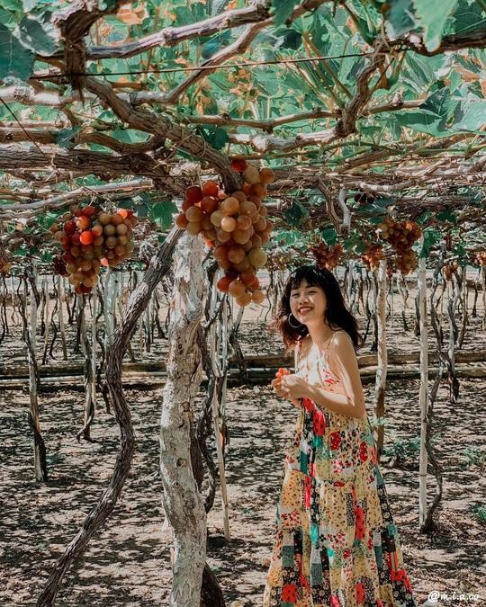 Khám phá vườn nho xanh mát, trĩu quả ở Ninh Thuận - Ảnh 6.